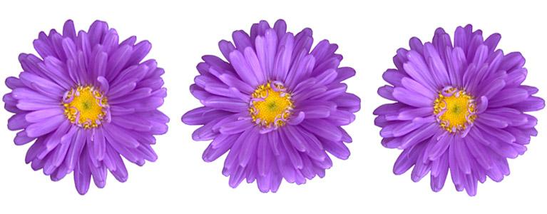 photo_flowers